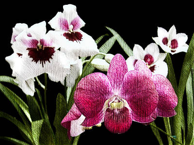 Purple And White Orchids Etching Art Print