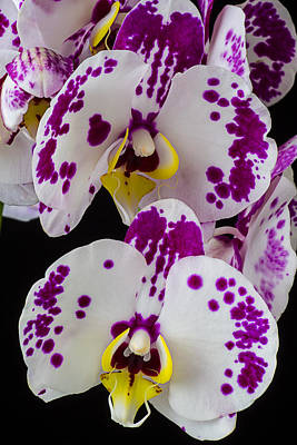White Orchid Photograph - Purple And White Orchids by Garry Gay
