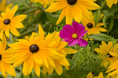 Purple And Yellow Flowers Art Print