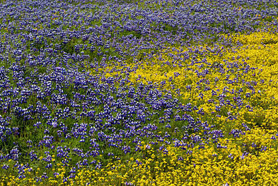 Photograph - Purple And Yellow On Table Mountain by Robert Woodward