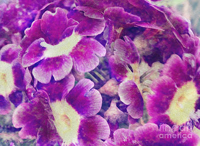 Photograph - Purple And Yellow Pansies by Gena Weiser