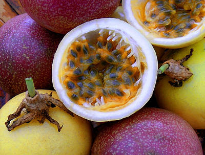 Purple And Yellow Passion Fruit Art Print by James Temple