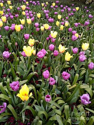Photograph - Purple And Yellow by Sherri Williams