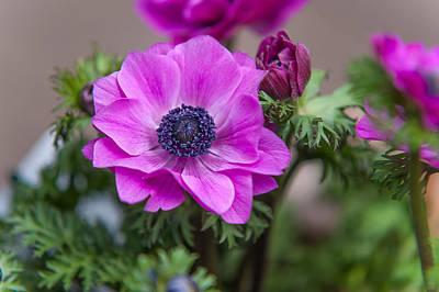 Amsterdam Market Photograph - Purple Anemone. Flowers Of Holland by Jenny Rainbow