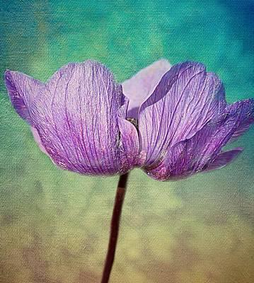 Purple Anemone. Print by Rosanna Zavanaiu