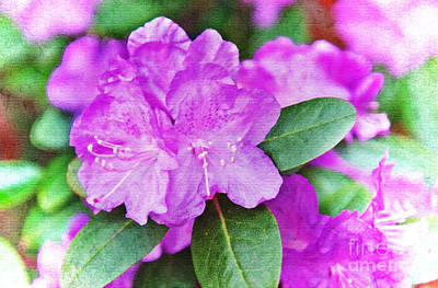 Photograph - Purple Azalea Flower Digital Art Prints by Valerie Garner