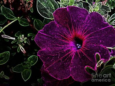 Photograph - Purple Beauty by Garnett  Jaeger