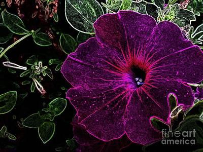 Photograph - Purple Beauty by Garnett  Jaeger