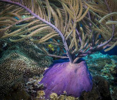 Photograph - Purple Beauty by Jean Noren