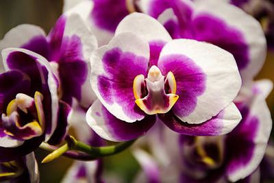 Photograph - Purple Beauty by Penny Lisowski
