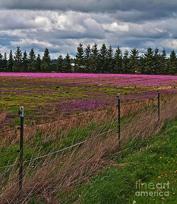 Photograph - Purple Blooming Pasture In Stormy Spring by Valerie Garner