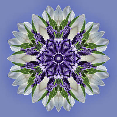 Photograph - Purple Blooms Mandala by Beth Sawickie