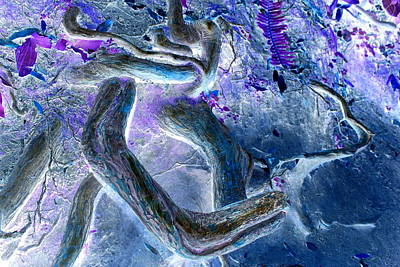Digital Art - Purple Blue Curves by Anne Barkley