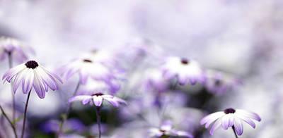 Purple Bokeh Art Print