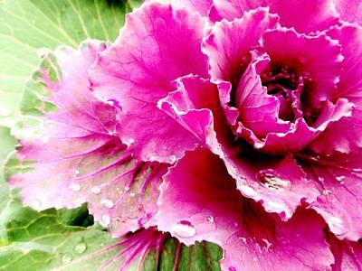 Photograph - Purple Cabbage by Sarah Pemberton