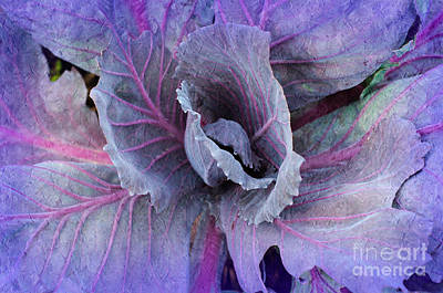 Mixed Media - Purple Cabbage - Vegetable - Garden by Andee Design