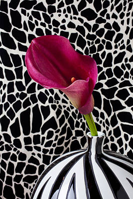 Purple Calla Lily Art Print by Garry Gay