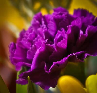 Purple Carnation Art Print