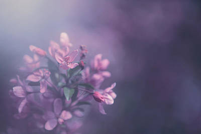 Blossoms Photograph - Purple by Carrie Ann Grippo-Pike