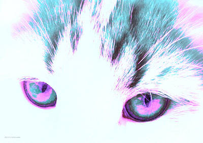 Photograph - Purple Cat Eyes by Anita Lewis