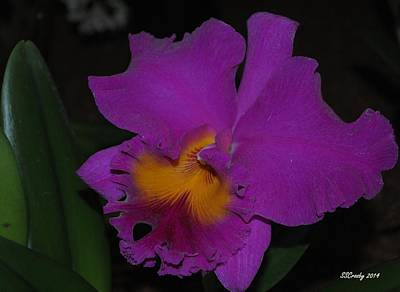 Photograph - Purple Cattleya by Susan Stevens Crosby