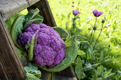 Cauliflower Photograph - Purple Cauliflower by Aberration Films Ltd