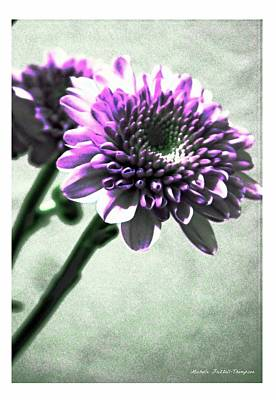 Purple Chrysanthemum Art Print by Michelle Frizzell-Thompson