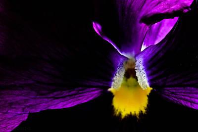 Photograph - Purple by Cindi Castro