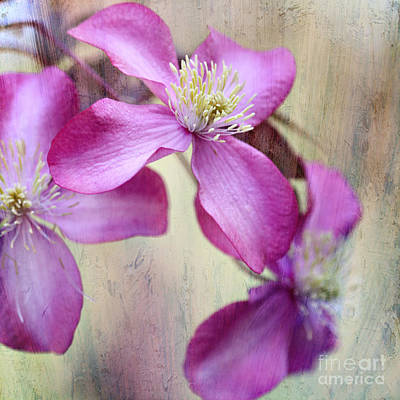 Photograph - Purple Clematis With Textures by Sylvia Cook