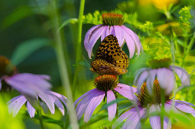 Sports Royalty-Free and Rights-Managed Images - Purple Cone And Butterfly by David Tennis