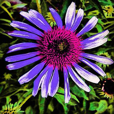 Purple Cone Flower  Art Print by Mara Lee