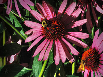 Photograph - Purple Coneflowers 003 by Lance Vaughn