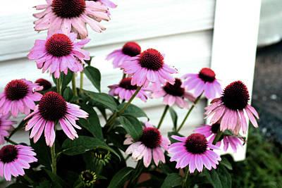 Flowers Photograph - Purple Coneflowers I by Lesa Fine