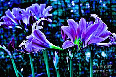 Photograph - Purple Country Lilies by Marsha Heiken