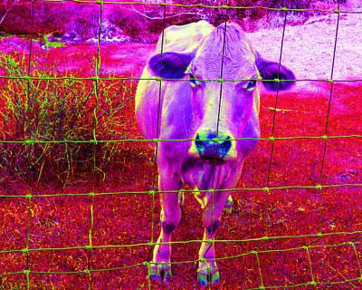 Photograph - Purple Cow by Patricia Januszkiewicz