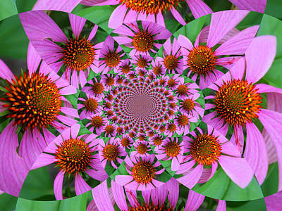 Photograph - Purple Crazy Daisy by Sheri McLeroy