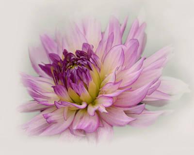 Photograph - Purple Dahlia by Ann Bridges