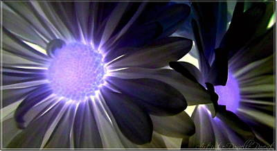 Purple Daisies Negative Effects Art Print by Danielle  Parent