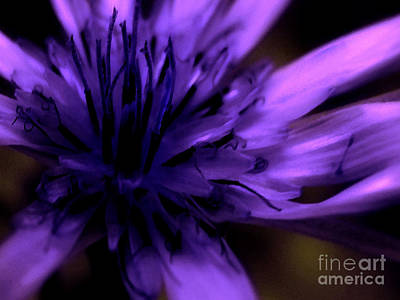 Dark Navy Blue Photograph - Purple Dance by Molly McPherson