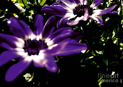 Photograph - Purple Daze by Cathy Dee Janes