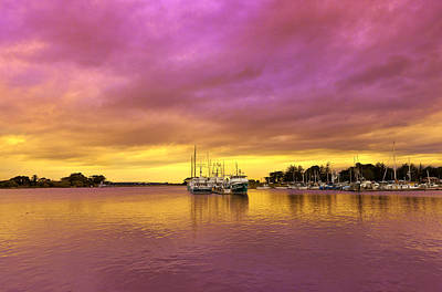 Photograph - Purple Daze by Jon Exley
