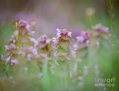 Wildflower Photograph - Purple Deadnettle Wildflowers by Kerri Farley