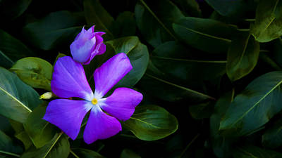 Photograph - Purple by Don Durfee