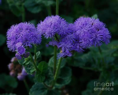 Photograph - Purple by Donna Cavanaugh