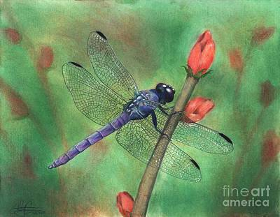 Drawing - Purple Dragonfly by Christian Conner