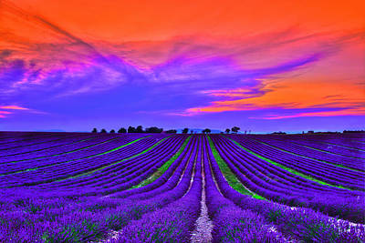 France Provence Photograph - Purple Dream by Midori Chan