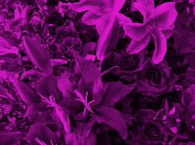 Purple Dreams Art Print