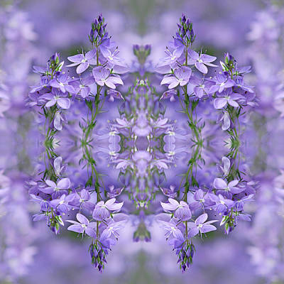 Photograph - Purple Dreams by Gill Billington