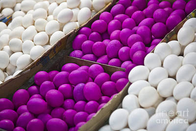 Photograph - Purple Eggs by Craig Lovell
