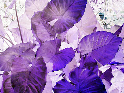 Photograph - Purple Elephants by Debi Singer